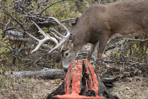 WILDGAME INNOVATIONS: Thou Shalt Not…
