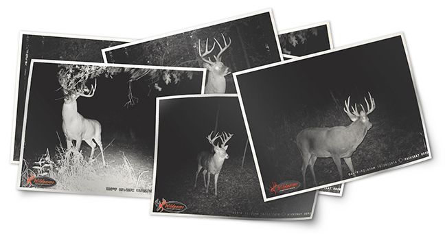 DEER HUNTING: Whitetail Wisdom - Plano Synergy