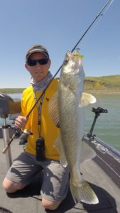 Healthy nightcrawlers are the key to catching trophy walleye.