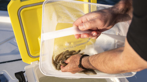 The Key to Catching More Fish with Live Bait